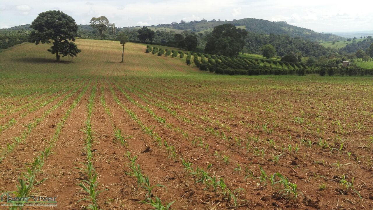 Fazenda - Fazda Café C. da Mata | cod.: 212441 R$ 2.400.000,00