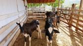 Fazenda - Fazenda Abaeté/MG 420HA | cod.: 211857 R$ 2.500.000,00