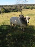 Fazenda - Fazenda Papagaios/MG   cod.: 212184 R$ 1.400.000,00