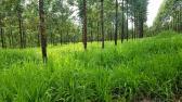 Fazenda - Fazenda Curvelo 354ha | cod.: 212218 R$ 3.500.000,00