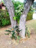 Casa em condomínio - Cond. Quintas das Esmeraldas   cod.: 212240 R$ 650.000,00