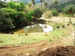 Fazenda   Zona Rural (Esmeraldas)   R$  1.500.000,00