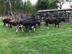 Fazenda   Zona Rural (Nova Serrana)   R$  1.350.000,00