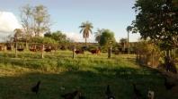 Fazenda   Zona Rural (Abaeté)   R$  2.800.000,00