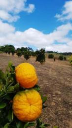 Fazendinha   Zona Rural (Itabirito)   R$  850.000,00