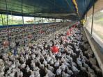 Fazenda   Zona Rural (Pará De Minas)   R$  2.200.000,00