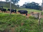 Fazenda   Zona Rural (Conceição Do Pará)   R$  1.800.000,00