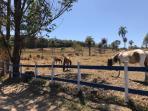 Fazenda   Zona Rural (Florestal)   R$  2.200.000,00