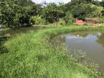 Fazendinha   Zona Rural (Florestal)   R$  2.000.000,00