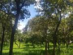 Fazenda   Zona Rural (Corinto)   R$  2.500.000,00