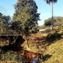 Fazenda - Centro - Sete Lagoas - R$  189.000,00