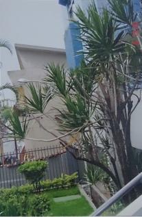 Apartamento   Floresta (Belo Horizonte)   R$  250.000,00