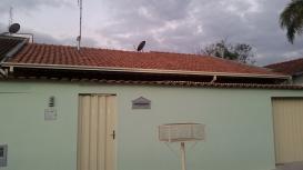 Casa   Jardim Das Azaléias (Poços De Caldas)   R$  320.000,00